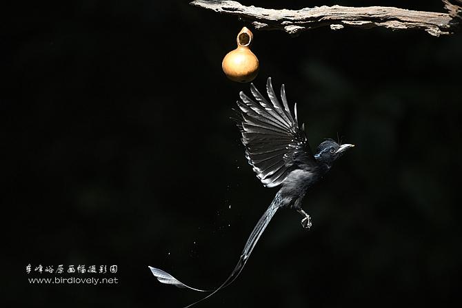 龙飞凤舞的大盘尾